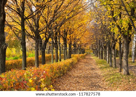 Pathway through the autumn park in sunny day - stock photo