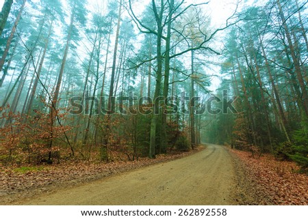 Pathway through the misty autumn forest on foggy day. Autumnal scenery, beauty landscape. Fall trees and leaves. - stock photo
