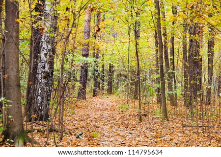 pathway with leaf litter in autumn forest