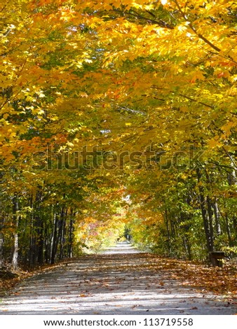 Pathway with overarching fall coloured trees