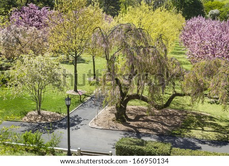 Pathways amongst the cherry trees at the Brooklyn Botanic Gardens in New York City - stock photo