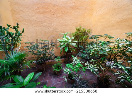 patio in the old house with plants in vases - stock photo