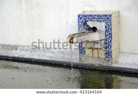 Patio with water pool and dove at Igreja de Sao Vicente de Fora, Lisbon, Portugal