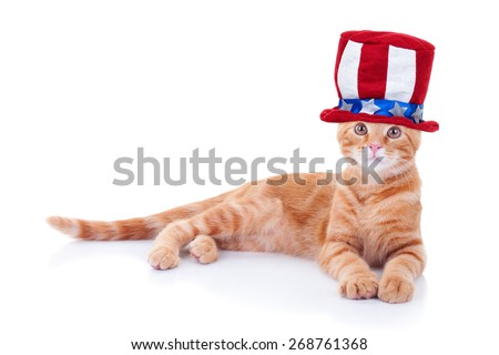 Patriotic American pet cat wearing Uncle Sam hat for 4th of July or Memorial Day. Fourth of July or Labor Day. - stock photo