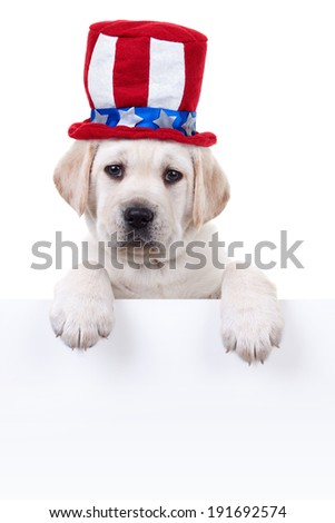 Patriotic Labrador puppy dog holding sign or banner - stock photo
