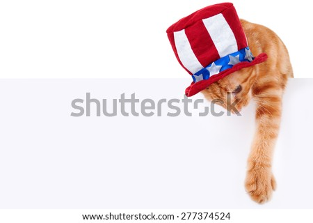 Patriotic pet cat and sign or banner for July 4th - stock photo
