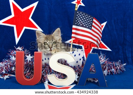 Patriotic tabby kitten, blue background with red stars outlined in white, kitten sitting in white box with blue stars and tinsel with red white blue U.S.A. blocks in front of him her, flag held high - stock photo