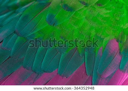 Pattern and Closeup of feather, User for background and texture - stock photo