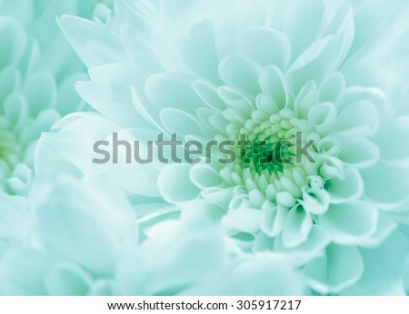 pattern and texture from flowers background,Abstract blur