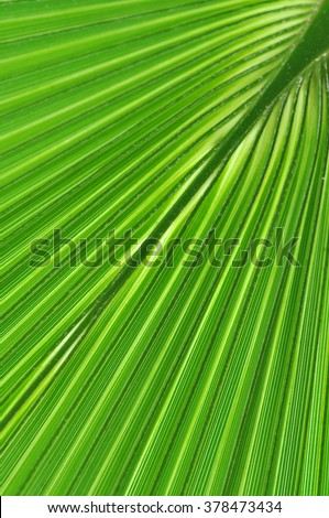 Pattern of a green palm leaf close-up