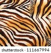 pattern of a tiger skin, excellent wildlife background - stock vector