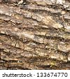 Pattern of bark - stock photo