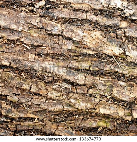 Pattern of bark - stock photo