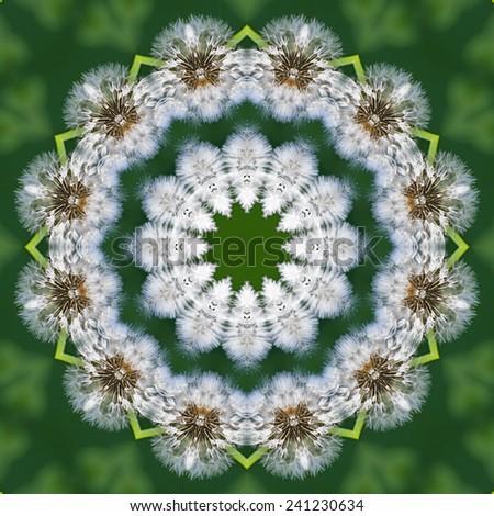 Pattern of Dandelion faded white head against dark green background - stock photo