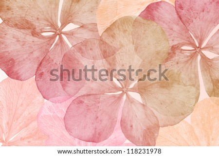 pattern of dried flower leafs in yellow, pink and orange - stock photo