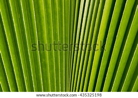 pattern of fan palm foliage in bright light with shadow  - stock photo