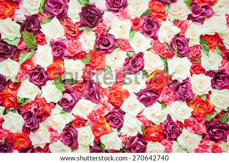 Pattern of fresh colorful roses - stock photo