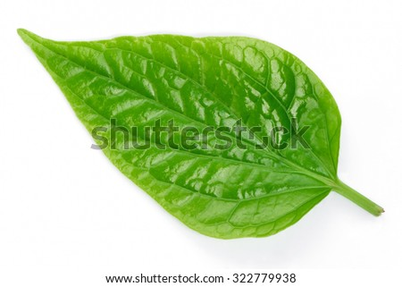 Pattern of fresh green leaves isolated on white background.