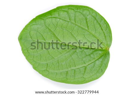 Pattern of fresh green leaves isolated on white background. - stock photo