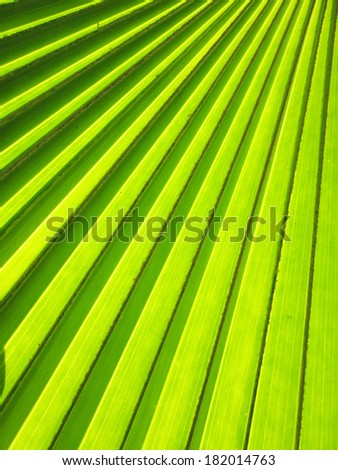 Pattern of green palm leaf