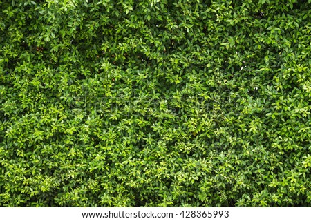 Pattern of green plant wall texture and background