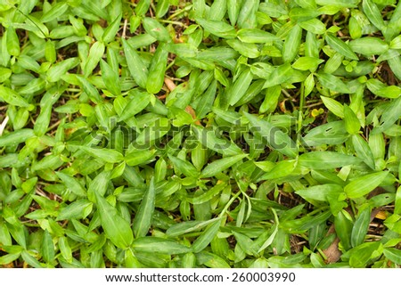 Pattern of green weed grasses as background