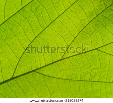 Pattern of growing leaf surface - stock photo