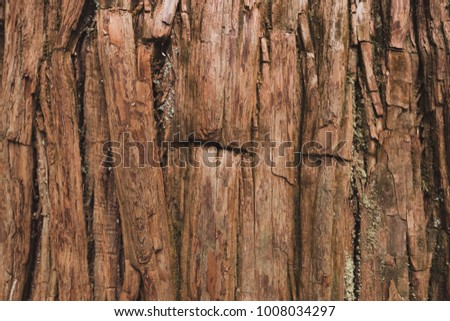 Pattern of old ancient pine in Nikko,Tochigi,Japan. Background and texture of tree's surface