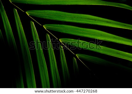 pattern of palm foliage in dark shadow (low key picture) - stock photo