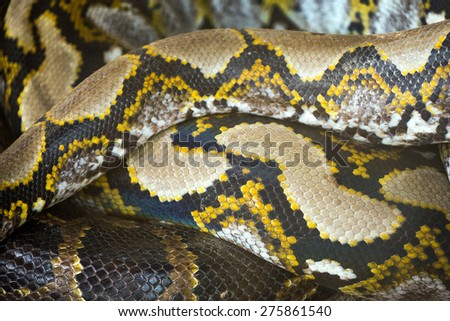 Pattern of python skin - stock photo