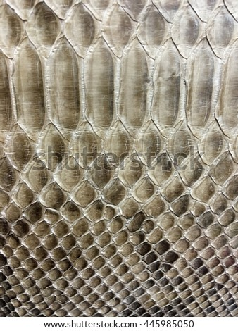 Pattern of the snake skin texture for background. Abstract background. - stock photo