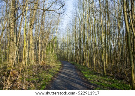 pattern of trees with clear blue sky and harmonic branch structure