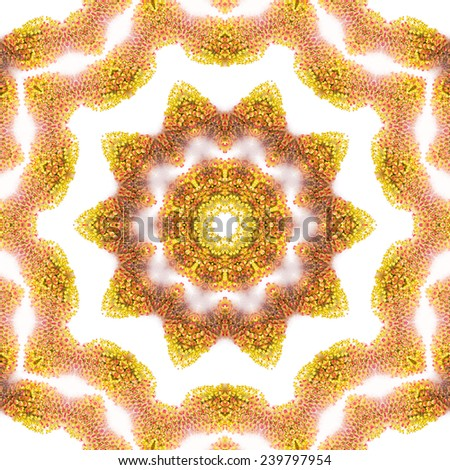 Pattern of Willow buds with yellow and red stamens isolated on white - stock photo