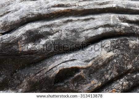 Pattern of wood decay texture background. - stock photo