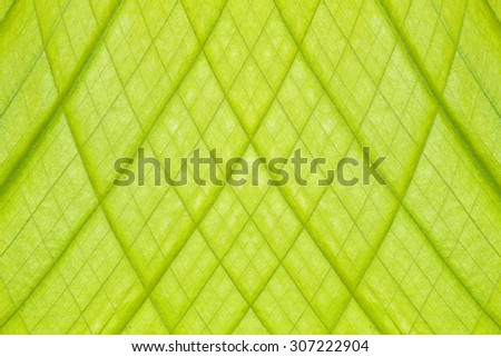 Pattern on fresh green leaves - stock photo