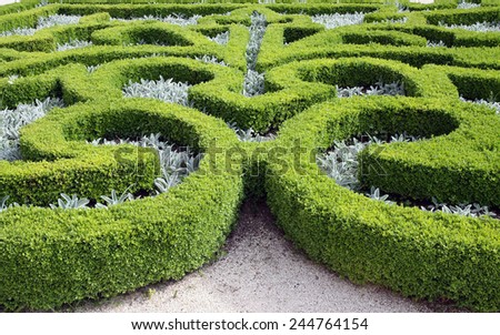Pattern on the flowerbed of boxwood bushes - stock photo