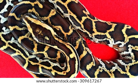 Pattern on the leather surface of Python