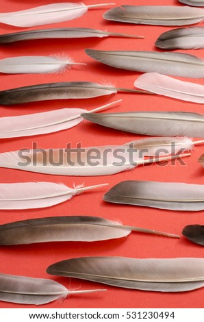 pattern with feathers on a red background, composition of feathers