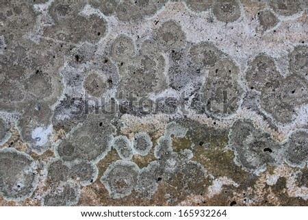 Patterns and textured on the cement