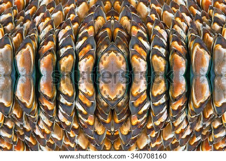 Patterns of mussels. - stock photo