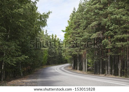 Paved road in the woods - stock photo