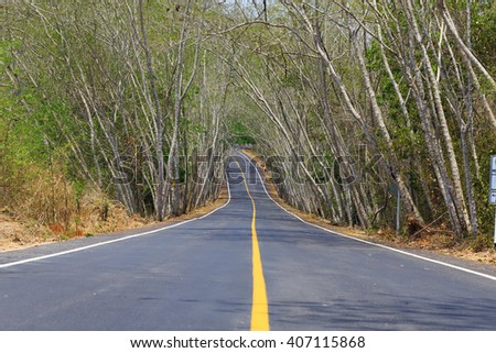 Paved road into the trees arch in Phetchaburi, Thailand. - stock photo