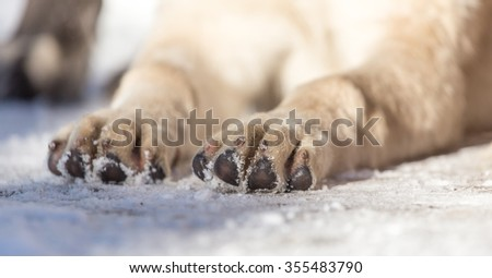 paw dog on the nature - stock photo