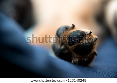 Paw of Sleeping Dog - stock photo