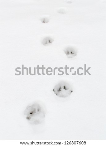 paw prints on fresh clean snow