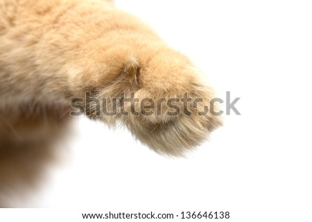 paw red cat on a white background - stock photo