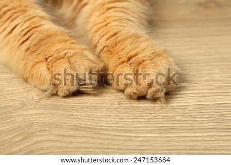 Paws of red cat on wooden floor background - stock photo