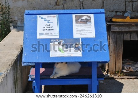 PAXOS, GREECE - JUNE 14, 2014: A cat feeding station for feral cats at Loggos on the Greek island of Paxos. The station is run by PAWS (Paxos Animal Welfare Society) who were formed in 2005. - stock photo