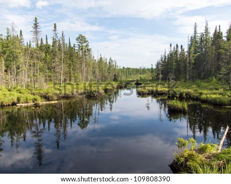 Peaceful Adirondack Afternoon in the Boreal Forest - stock photo