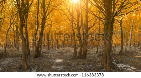 Peaceful autumn landscape in the woods.Bright sunlight through branches. - stock photo